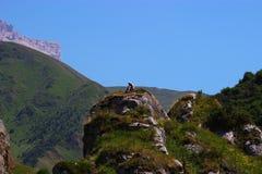 Flicka på berget som läser en bok royaltyfri fotografi