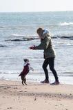 Flicka på stranden med Boston Terrier Fotografering för Bildbyråer