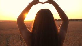 Flicka på symbol för hjärta för danande för vetefält på solnedgången arkivfilmer