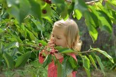 Flicka som äter röda körsbär från träd arkivbilder