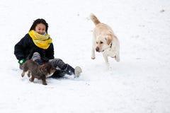 Flicka som åka släde med hennes hund Fotografering för Bildbyråer