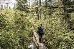 Flicka som fotvandrar i Kanada Ontario sjön av det naturliga lösa landskapet för två floder nära vattnet i Algonquinnationalpark arkivbild