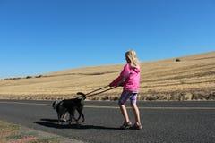 Flicka som går på trottoar med hundar Arkivbild