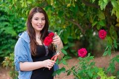 Flicka som klipper en ros Royaltyfria Foton