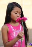 Flicka som luktar rosa Daisy Flower Fotografering för Bildbyråer