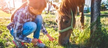 Flicka som matar den bruna hästen arkivbilder