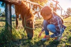 Flicka som matar den bruna hästen royaltyfri foto