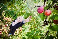 Flicka som ner för en förgrena sig med äpplen Royaltyfri Bild
