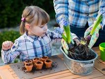 Flicka som planterar blommakulor Arkivfoton