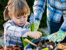 Flicka som planterar blommakulor Royaltyfri Bild