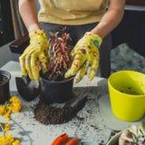 Flicka som planterar den röda växten i plast- kruka arkivbild