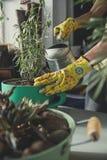 Flicka som planterar en lavendelväxt royaltyfria foton