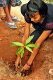 flicka som planterar treebarn Royaltyfri Foto