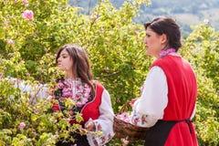 Flicka som poserar under rosplockningfestivalen i Bulgarien royaltyfria foton