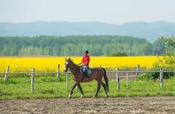 Flicka som rider en häst Arkivfoto