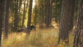Flicka som rider en häst som går i träna stock video
