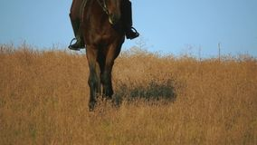 Flicka som rider en häst som galopperar över fältet långsam rörelse stock video