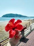 Flicka som rymmer den röda blomman i hand på bakgrund av havet och berget arkivbilder