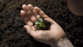 Flicka som rymmer den unga gröna växten i händer Makroslut upp av händer som rymmer den lilla gröna växten lager videofilmer