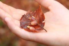 Flicka som rymmer det röda bladet i hennes hand arkivbild