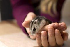 Flicka som rymmer en mycket liten härlig hamster arkivfoto