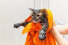 Flicka som rymmer en våt katt i en orange handduk i badrummet arkivbild