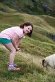 Flicka som ser får som betar, medan gå upp de Slieve ligaklipporna, ståndsmässiga Donegal, Irland Arkivfoton