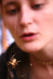 flicka som ser spindelrengöringsduk Arkivbilder