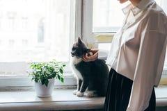 Flicka som slår en katt på en fönsterbräda arkivfoton