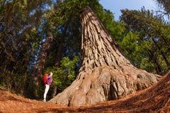 Flicka som står nära stort träd i redwoodträdet Kalifornien Royaltyfria Bilder