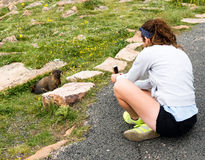 Flicka som tar bilden av murmeldjuret med mobiltelefonen Royaltyfri Fotografi