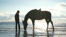 Flicka som tar omsorg av hästarna på stranden stock video