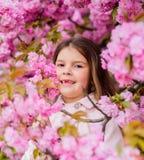 Flicka som tycker om blom- arom Unge p? rosa bakgrund f?r blommasakura tr?d Barnet tycker om liv utan allergi sniffa arkivbilder