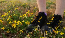 Flickaanseende i ett fält av blommor royaltyfria foton