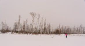 Flickaanseendet skidar på i vinterskog Arkivbilder
