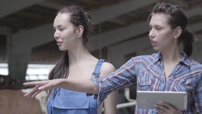 Flickabönder för stående som två gör, turnerar av ladugården med kor på lantgården Flickabonden visar besökarekorna och arkivfilmer