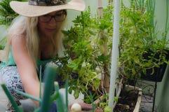 Flickabasilikafruktträdgård 2 Royaltyfri Fotografi