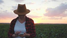Flickabonden är på fältet på solnedgången Det övervakar tillväxten av skördar genom att använda en smartphone lager videofilmer