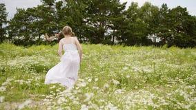 FlickaDaisy Lawn Rotate Field Bloom utomhus- natur lager videofilmer