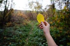 Flickahand som rymmer en gul tjänstledighet med skogen i bakgrunden royaltyfria bilder