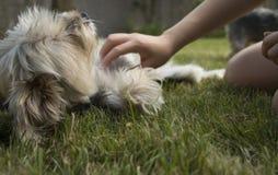 Flickakel med en ung blandad-avel hund som lägger på gräset Fotografering för Bildbyråer