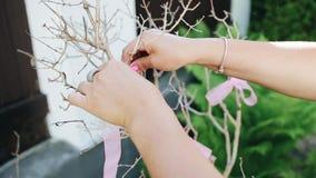 Flickan binder ett rosa band till ett torrt dekorativt träd Genusparti h?ndelse stock video