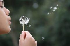 Flickan blåser maskrosen Fotografering för Bildbyråer