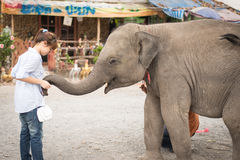 Flickan & elefanten Royaltyfria Foton