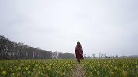 Flickan går till och med ett fält av blommor stock video