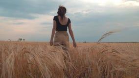 Flickan går vetefältet på solnedgången stock video