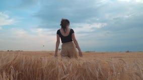 Flickan går vetefältet på solnedgången lager videofilmer