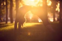 Flickan gör yoga som står i brohjul, poserar urdhvadhanurasana i parkera på solnedgången Arkivfoto