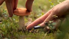 Flickan grundar en champinjon i skogen lager videofilmer