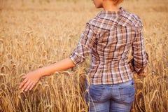 Flickan, i att trycka på för plädskjorta av moget vete, gå i ax Arkivbilder